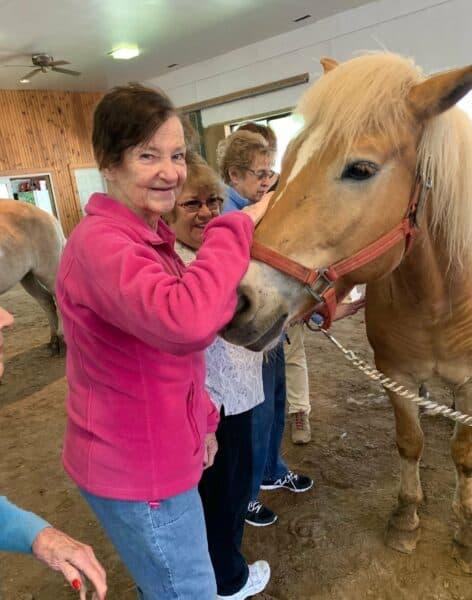 Methuen Village Memory Support equine therapy